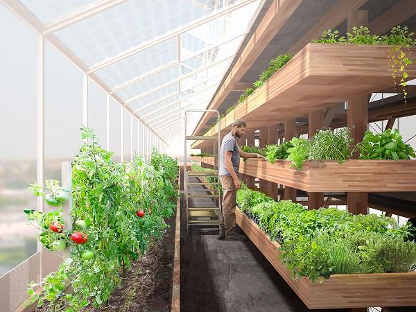 Kiến trúc sư thiết kế nông nghiệp theo kiến trúc chiều dọc