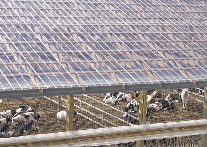 Sử dụng tôn nhựa lấy sáng cho trang trại