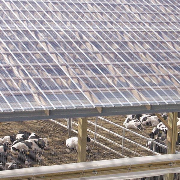Ứng dụng của tôn nhựa lấy sáng trong các trang trại chăn nuôi