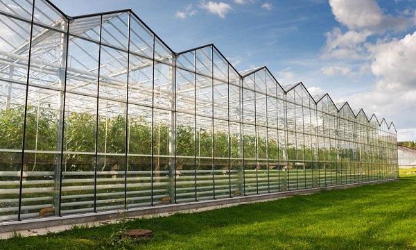 Ứng dụng tấm lấy sáng làm nhà kính trong nông nghiệp